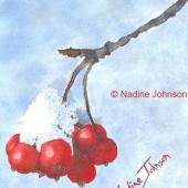 Nadine Johnson - Winter Berries