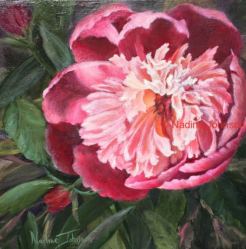 Nadine Johnson - Peony's in Bloom