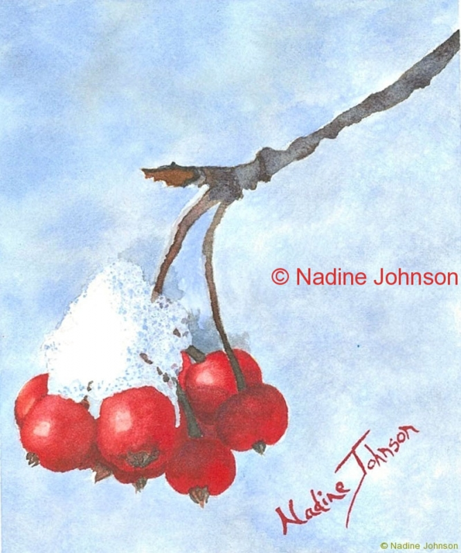 Nadine Johnson - Winter Berries